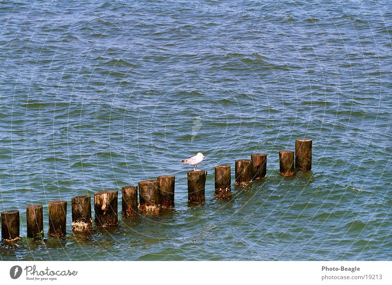 groyne cast ;-) Lake Ocean Break water Maritime Seagull Zingst Gull birds Baltic Sea Water sea seaside wave waves holiday holidays vacation