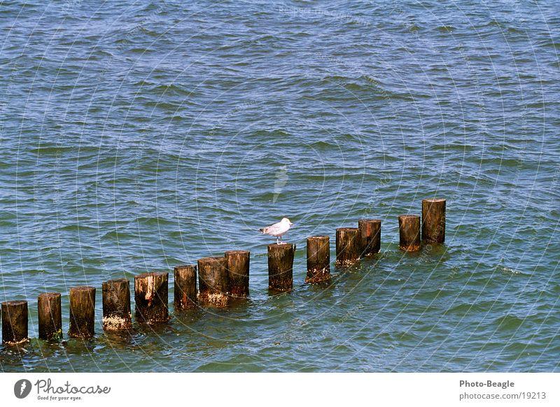 Water Ocean Lake Baltic Sea Seagull Break water Maritime Zingst Mecklenburg-Western Pomerania Gull birds