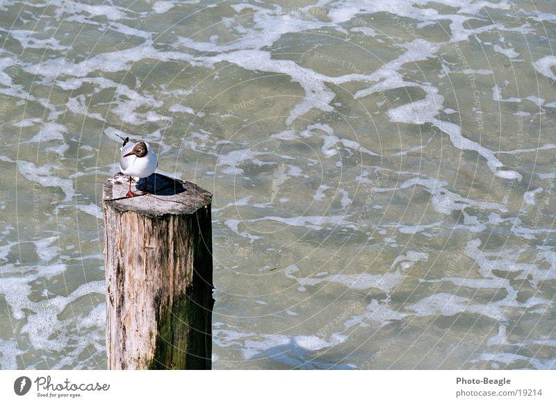 Water Ocean Lake Baltic Sea Seagull Pole Maritime Zingst Gull birds