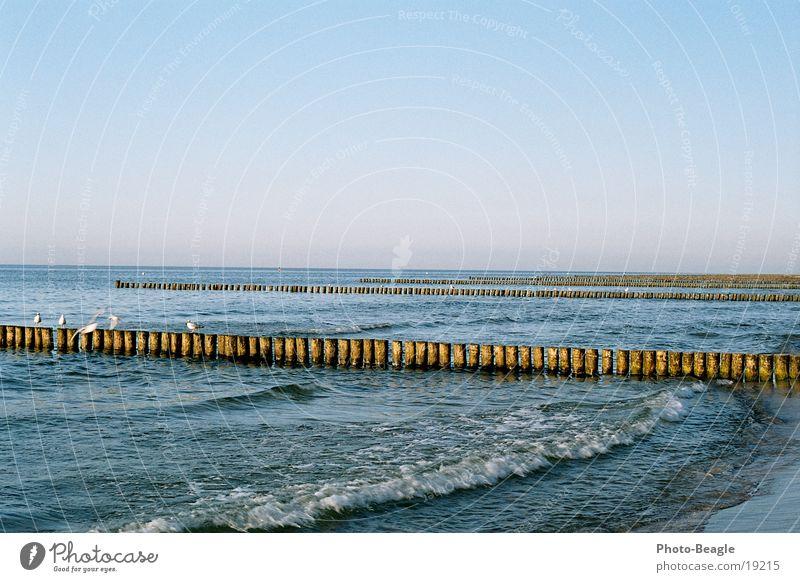 Water Lake Baltic Sea Seagull Wanderlust Maritime Zingst Evening sun Gull birds