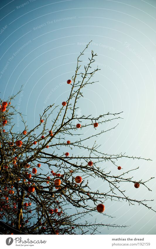 Nature Tree Plant Red Winter Calm Loneliness Cold Environment Elegant Esthetic Round Branch Apple Idyll Fantastic