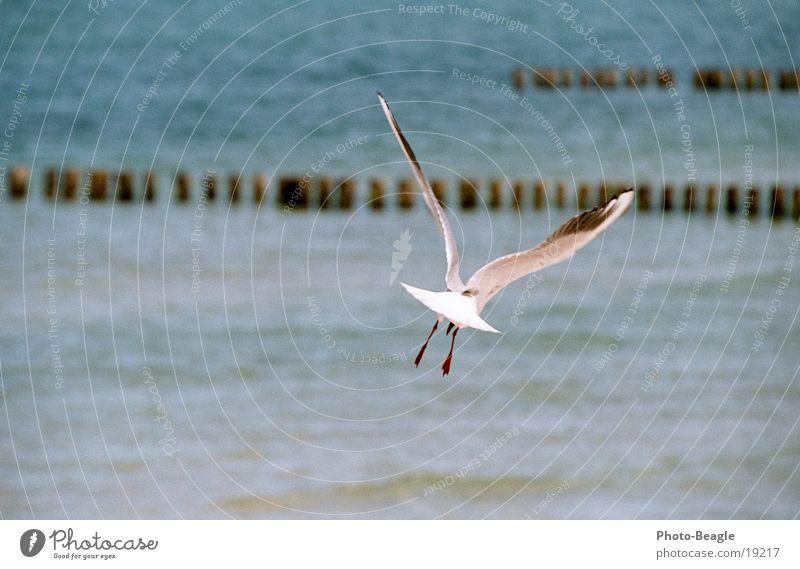 Ocean Freedom Lake Warmth Aviation Sailing Baltic Sea Seagull Zingst Glide Gull birds Glider flight