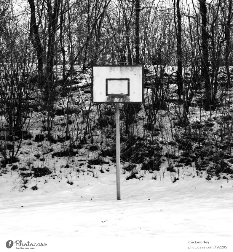 Winter Joy Forest Environment Meadow Snow Playing Freedom Leisure and hobbies Dirty Fresh Exceptional Cool (slang) Trashy Sports Training Euphoria