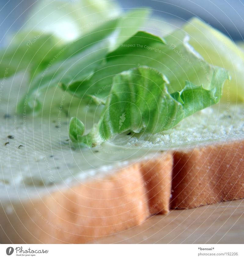 MAKING OF Lettuce Salad Bread tartar sauce Simple Fresh Delicious Speed Brown Green White Appetite To enjoy Ease White bread Sandwich Colour photo Interior shot