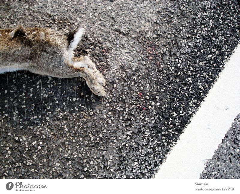 Animal Street Death Lie Transport Wild animal Grief Transience Pelt Pain Hare & Rabbit & Bunny Destruction Paw Disgust Accident Signs and labeling