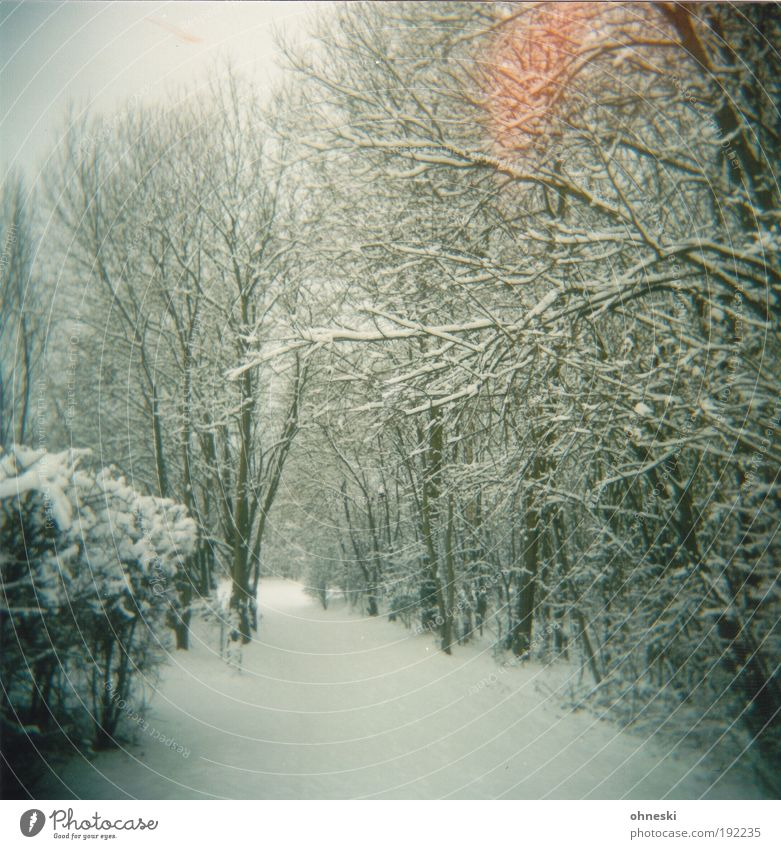 Nature Tree Plant Winter Loneliness Forest Snow Lanes & trails Park Landscape Ice Environment Frost Longing Expectation Holga