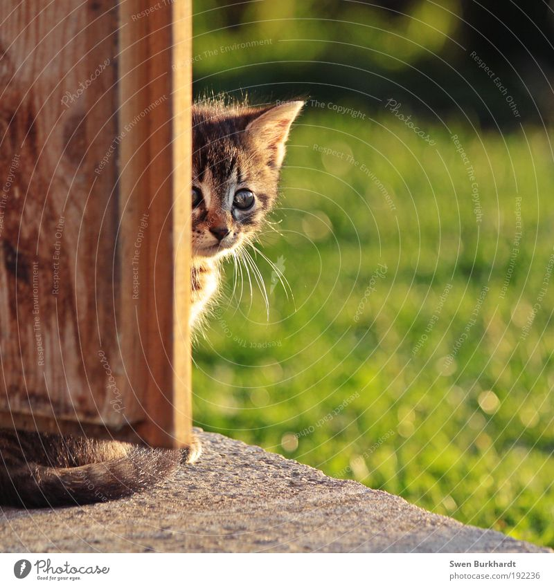Cat Green Summer Animal Baby animal Environment Eyes Meadow Grass Natural Wood Gray Brown Wild Fear Door