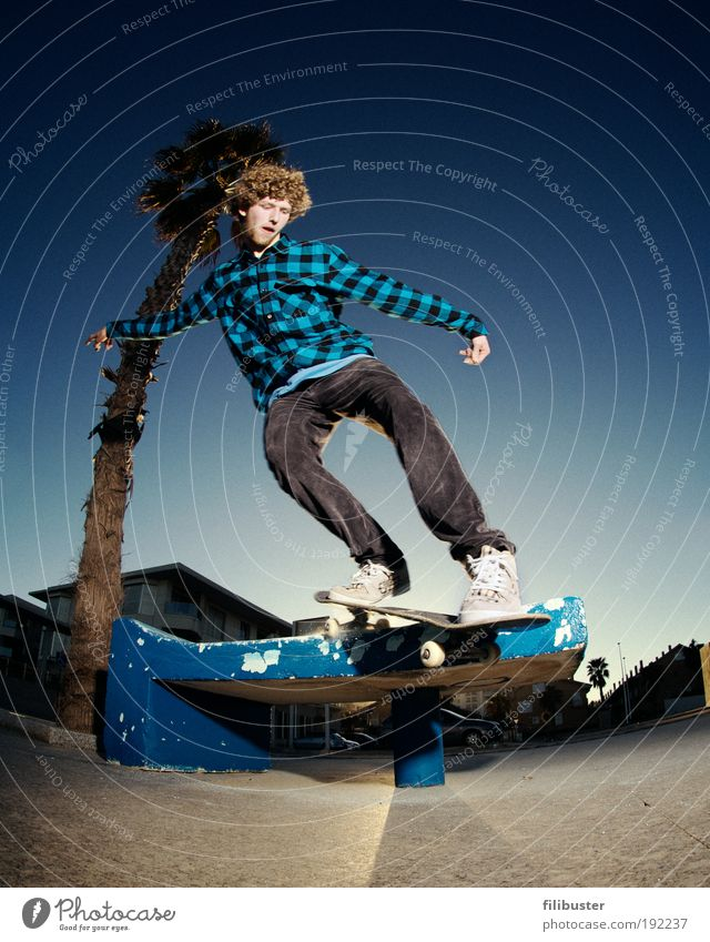 Skater under the palm tree Human being Masculine Young man Youth (Young adults) 1 18 - 30 years Adults Youth culture Palm tree Movement Driving Sports Jump Blue