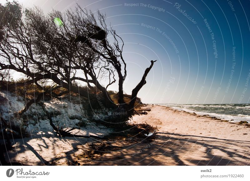 Wind in your hair Group Environment Nature Landscape Plant Water Cloudless sky Horizon Climate Beautiful weather Tree Wind cripple Twigs and branches Coast