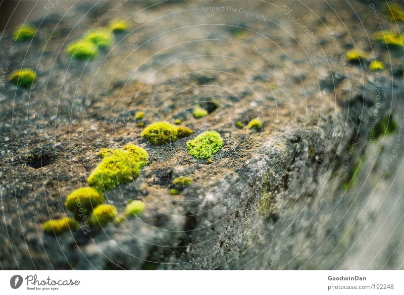 Green Gray Stone Wall (barrier) Dirty Wet Natural Longing Analog Fragrance Moss Spring fever
