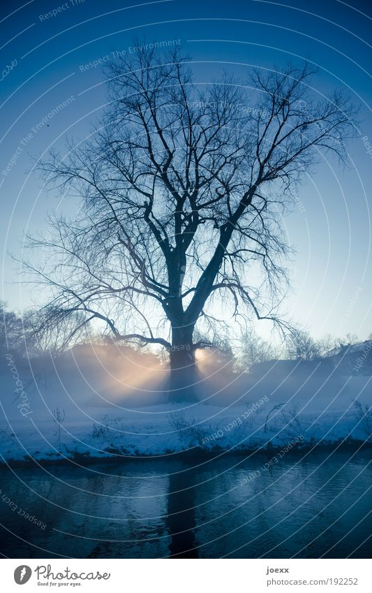 Nature Sky Tree Sun Blue Plant Winter Cold Park Contentment Religion and faith Beautiful weather Belief Snowscape Sunrise Morning