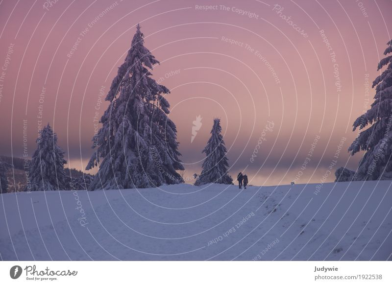 Pink winter wonderland Fitness Well-being Calm Handcrafts Winter Snow Winter vacation Hiking Human being Friendship Couple Partner Life Environment Nature