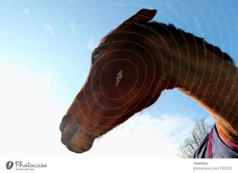 Animal Emotions Natural Moody Power Stand Threat Observe Might Uniqueness Horse Anger Animal face Near Watchfulness Brave