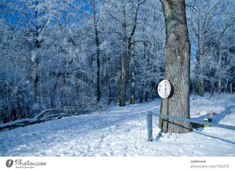 winter wonderland Trip Freedom Winter vacation Hiking Environment Nature Landscape Ice Frost Snow Tree Forest Movement Loneliness Relaxation Mysterious Idyll