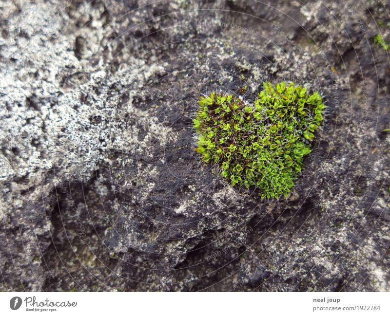 I <3 nature Plant Moss Stone Heart Love Dream Esthetic Fresh Healthy Natural Soft Green Infatuation Uniqueness Ease Growth Organic produce Colour photo