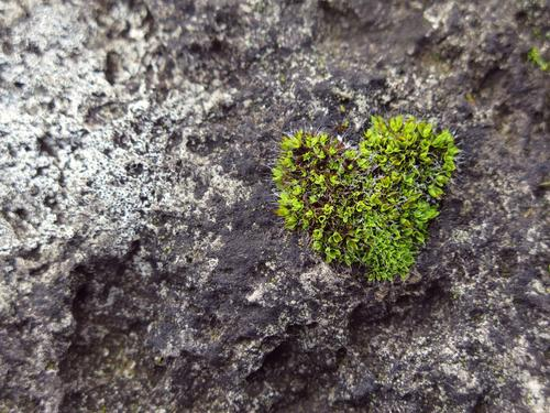 Plant Green Love Natural Healthy Stone Dream Growth Fresh Esthetic Heart Uniqueness Soft Organic produce Infatuation Ease