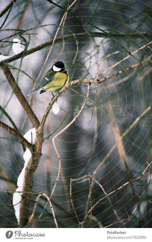 Nature Winter Forest Cold Art Bird Idyll Sit Feather Twig Twigs and branches Plumed Tit mouse Tit mouse