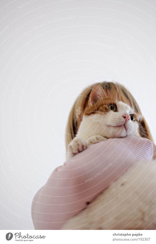 Woman Human being Feminine Cat Contentment Adults Near Animal face Animal Curiosity Cute Portrait photograph Watchfulness Relationship Pet Brash
