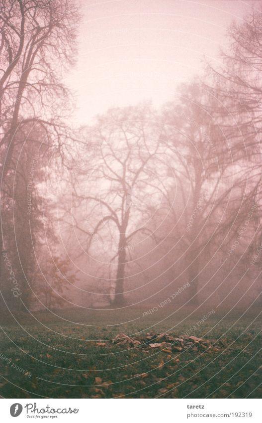 Nature Tree Green Winter Calm Meadow Autumn Grass Gray Park Landscape Fog Fantastic Bleak Haze
