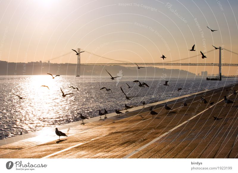 Air show in Lisbon Vacation & Travel Tourism City trip Sunrise Sunset Sunlight Beautiful weather River bank Tejo Tejo Bridge Portugal Capital city Deserted