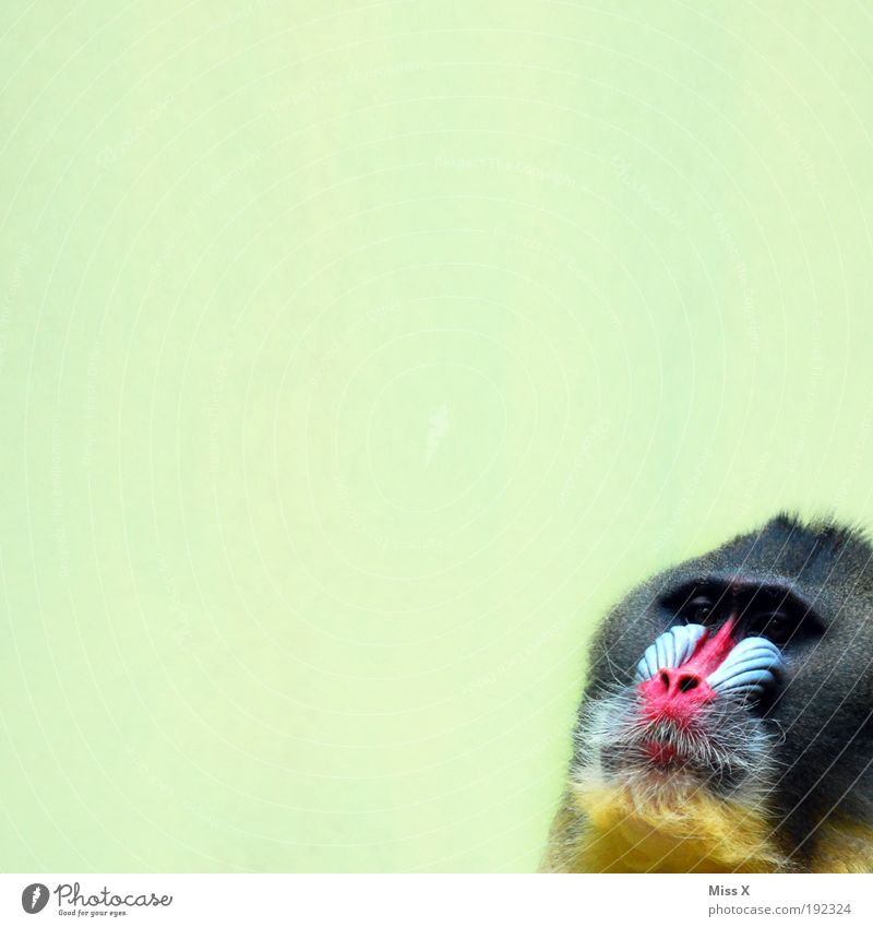 Animal Zoo Wild animal Boredom Exotic Monkeys Baboon