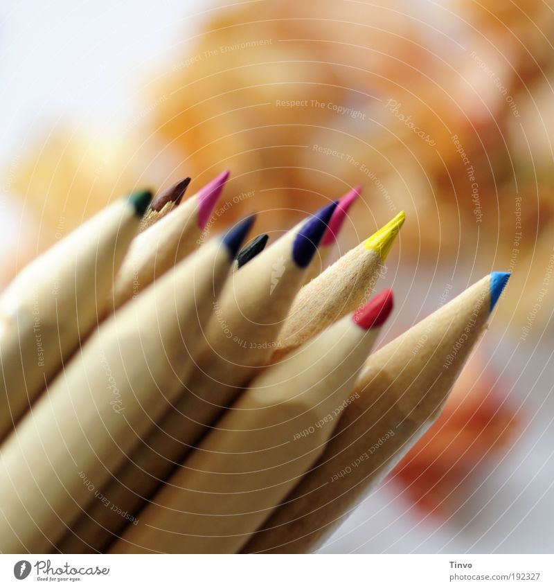 stuntbifts Leisure and hobbies Multicoloured Idea Uniqueness Inspiration Creativity Art Crayon Painting (action, artwork) Draw crayons Point peak Sharpened