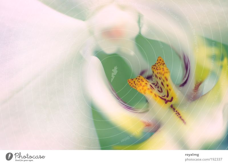 flower Nature Spring Plant Flower Orchid Yellow White Multicoloured Interior shot Shallow depth of field