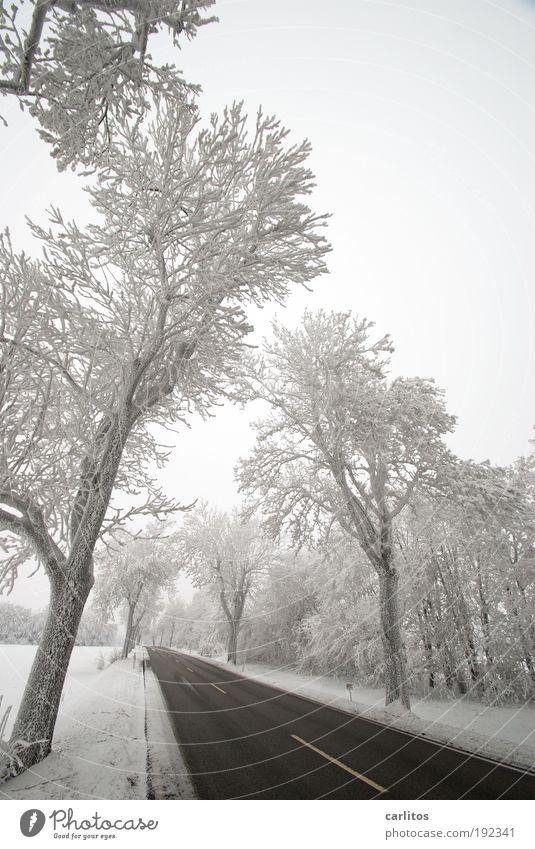 Nature White Tree Winter Black Loneliness Street Cold Snow Movement Landscape Ice Arrangement Esthetic Frost Idyll