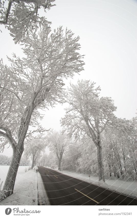 Nature White Tree Winter Black Loneliness Street Cold Snow Movement Landscape Ice Arrangement Esthetic Frost Idyll