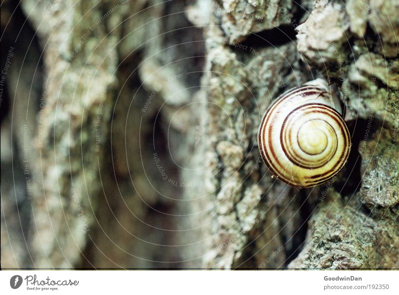 Analog screw Nature Weather Tree Tree bark Animal Snail 1 Crouch Looking Colour photo Exterior shot Deserted