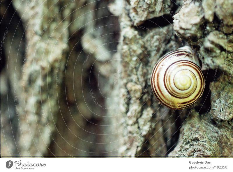 Nature Tree Animal Weather Snail Tree bark Crouch