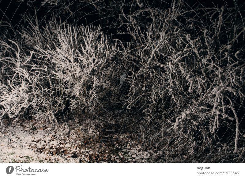 strange place Nature Plant Landscape Loneliness Winter Dark Cold Snow Death Dream Fear Dangerous Fear of death Frozen Force Horror