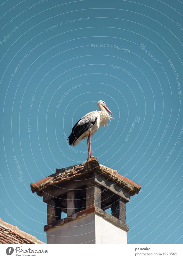 easterly wind Sky Cloudless sky Tower Roof Wild animal Bird 1 Animal Authentic Stork Chimney Roofing tile Wind Expectation Baby Spring Spring fever Colour photo