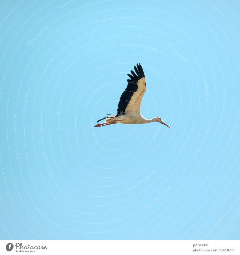 Clear view Elements Sky Cloudless sky Spring Beautiful weather Animal 1 Sign Spring fever Anticipation Optimism Watchfulness Birth Baby Stork Flying Blue sky
