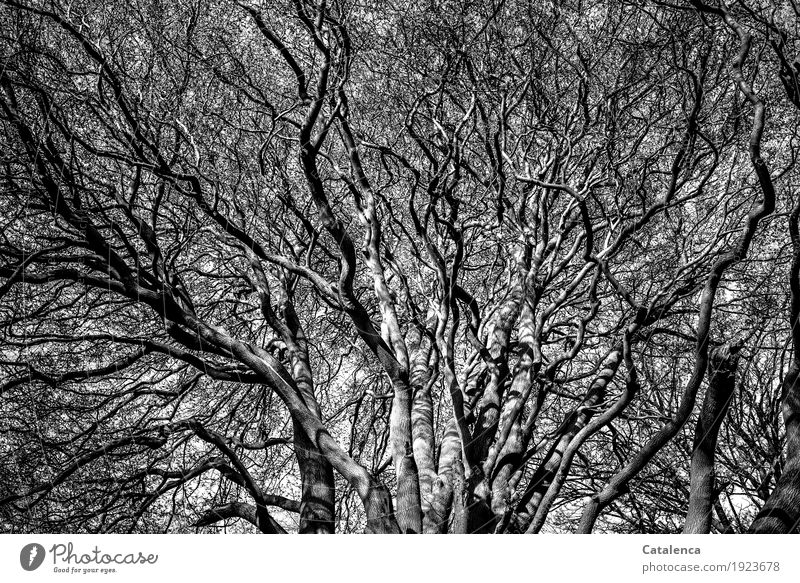 Nature White Tree Far-off places Winter Forest Black Environment Life Senior citizen Gray Moody Growth Power Authentic Large