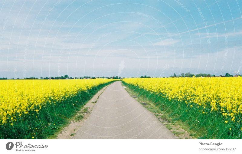 Street Spring Lanes & trails Canola Fehmarn
