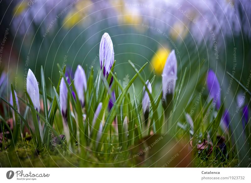 Nature Plant Green Beautiful White Flower Environment Yellow Blossom Spring Natural Garden Growth Esthetic Happiness Drops of water