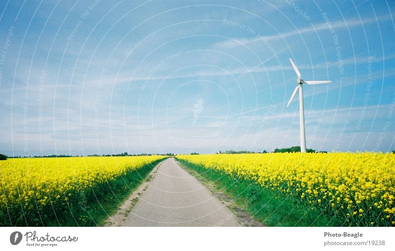 dandelion Canola Spring Wind energy plant Fehmarn Street Lanes & trails Renewable energy