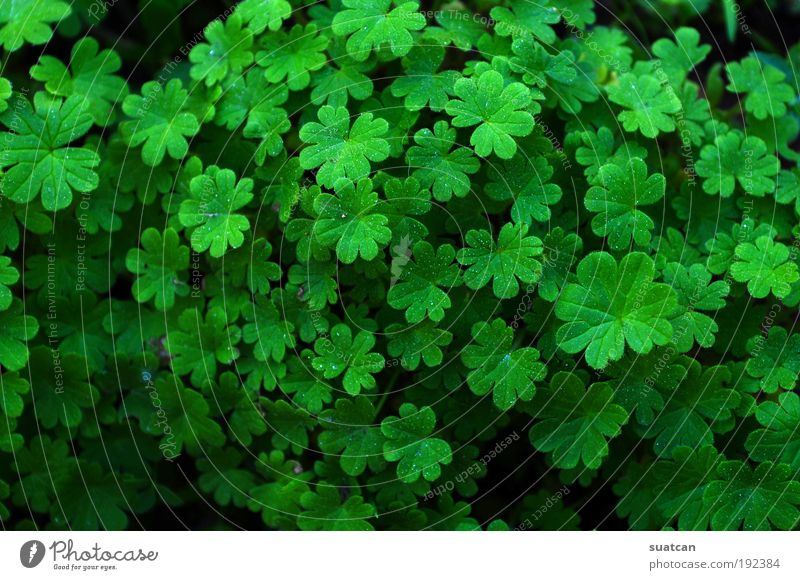 Natural Texture With Clovers Decoration Environment Nature Plant Grass Leaf Wild plant Meadow Drop Growth Cool (slang) Fresh Bright Green Colour Tradition Set