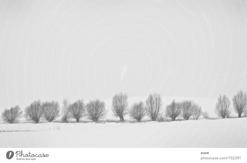pasture fence Environment Nature Landscape Elements Sky Cloudless sky Winter Climate Snow Tree Esthetic Bright Cold Natural Gloomy White Emotions Moody Sadness