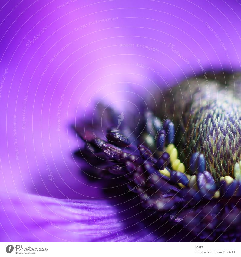 Nature Beautiful Flower Plant Summer Colour Blossom Spring Elegant Fresh Violet Natural Fragrance Macro (Extreme close-up) Odor