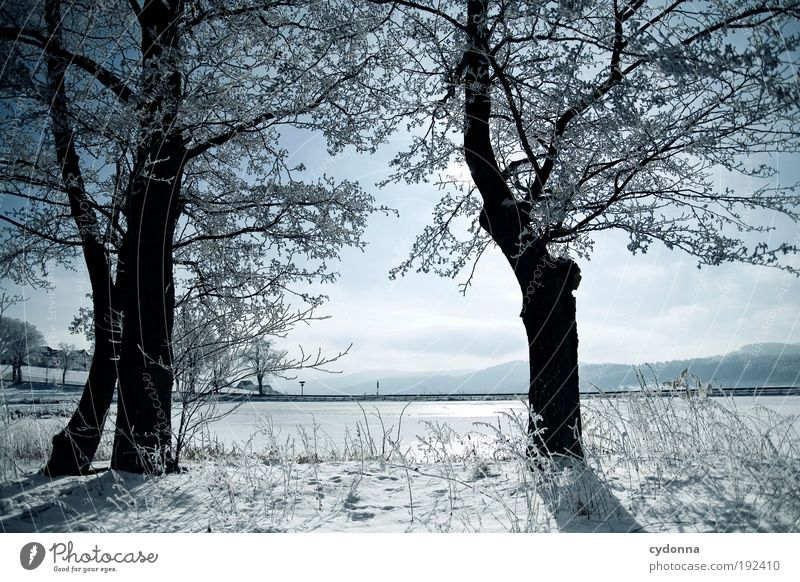 Nature Beautiful Sky Tree Winter Calm Loneliness Far-off places Life Cold Snow Relaxation Freedom Dream Landscape Ice