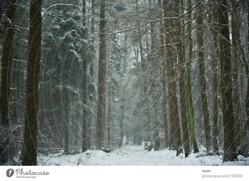 Nature Tree Loneliness Winter Landscape Forest Environment Dark Cold Snow Lanes & trails Sadness Snowfall Weather Natural Climate