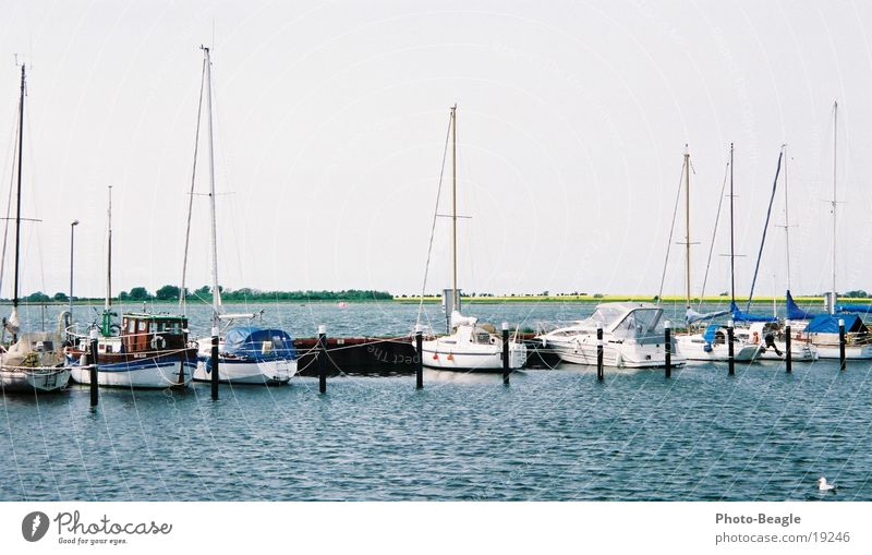 Water Lake Watercraft Europe Harbour Baltic Sea Canola Yacht Black-headed gull  Sport boats Fehmarn