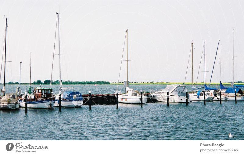 Water Lake Watercraft Europe Harbour Baltic Sea Canola Yacht Black-headed gull  Sport boats Fehmarn