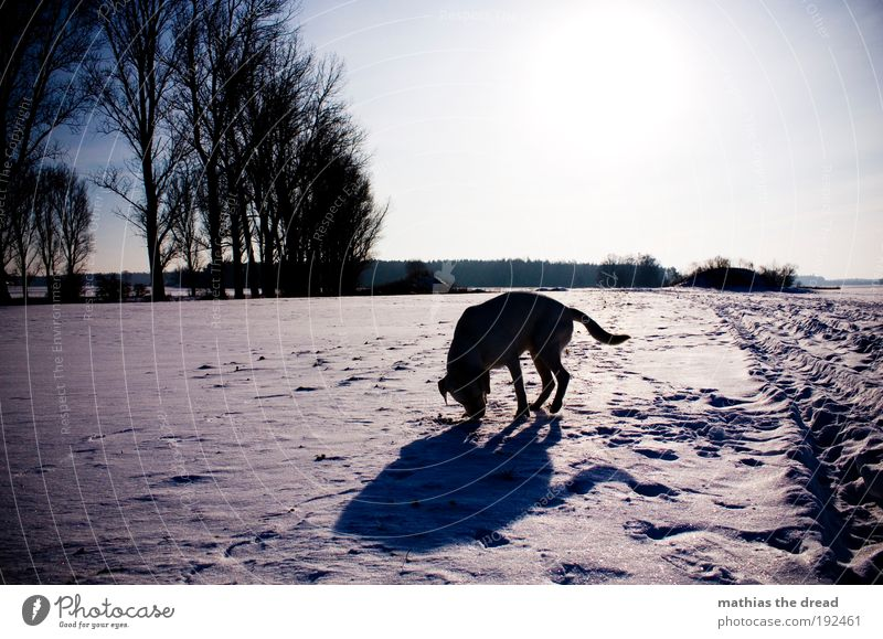 snowhound Environment Nature Landscape Plant Cloudless sky Sunlight Winter Beautiful weather Ice Frost Snow Tree Meadow Field Forest Animal Pet Dog 1 Cold