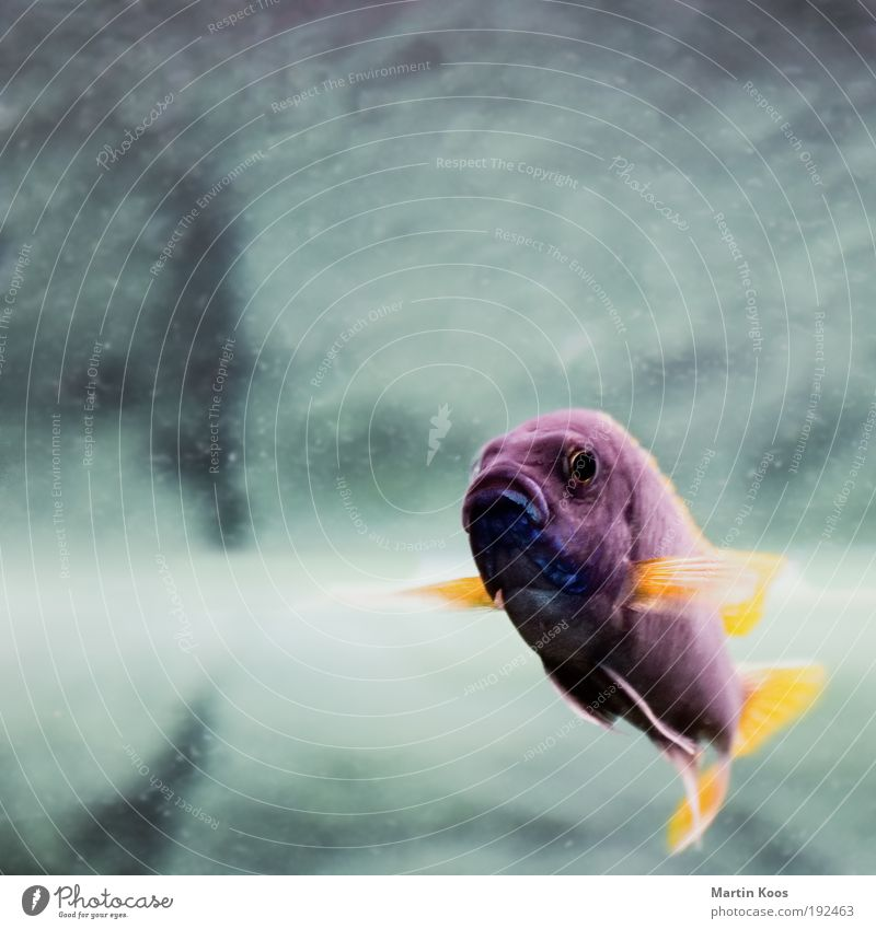 o ... o ... o .... Fish 1 Animal Breathe Feeding Dive Exceptional Exotic Leisure and hobbies Communicate Pride Sadness Environmental protection Multicoloured