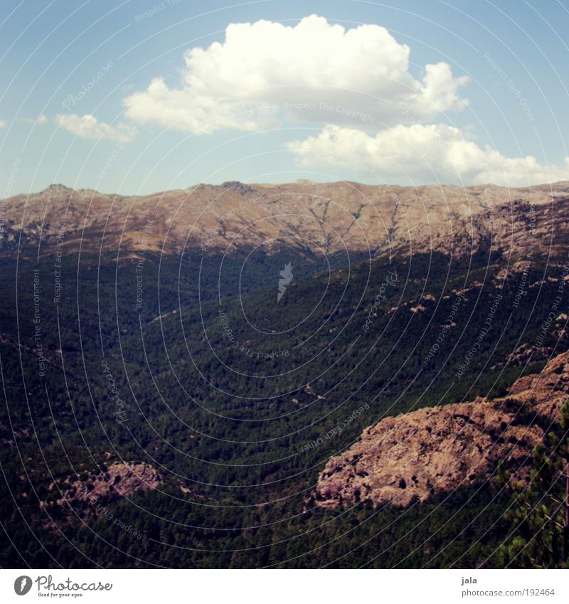 Nature Sky Tree Summer Clouds Forest Mountain Landscape Rock Vantage point Joie de vivre (Vitality) Beautiful weather