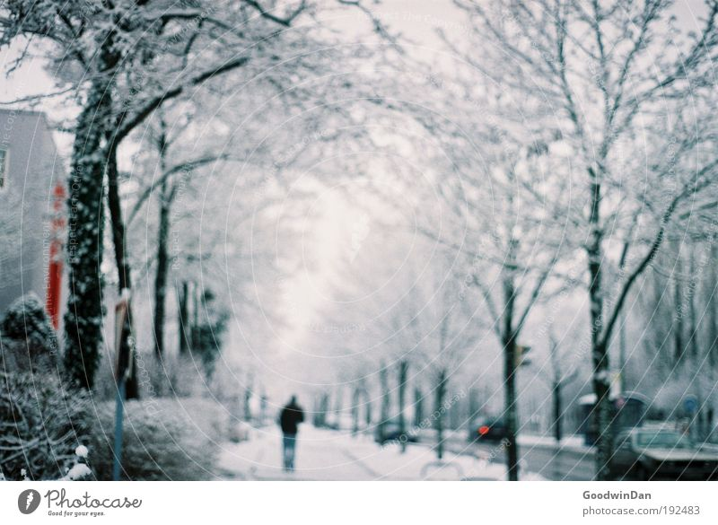 Human being Man Sky White Tree Winter Clouds Far-off places Street Snow Dream Adults Road traffic Fog Masculine