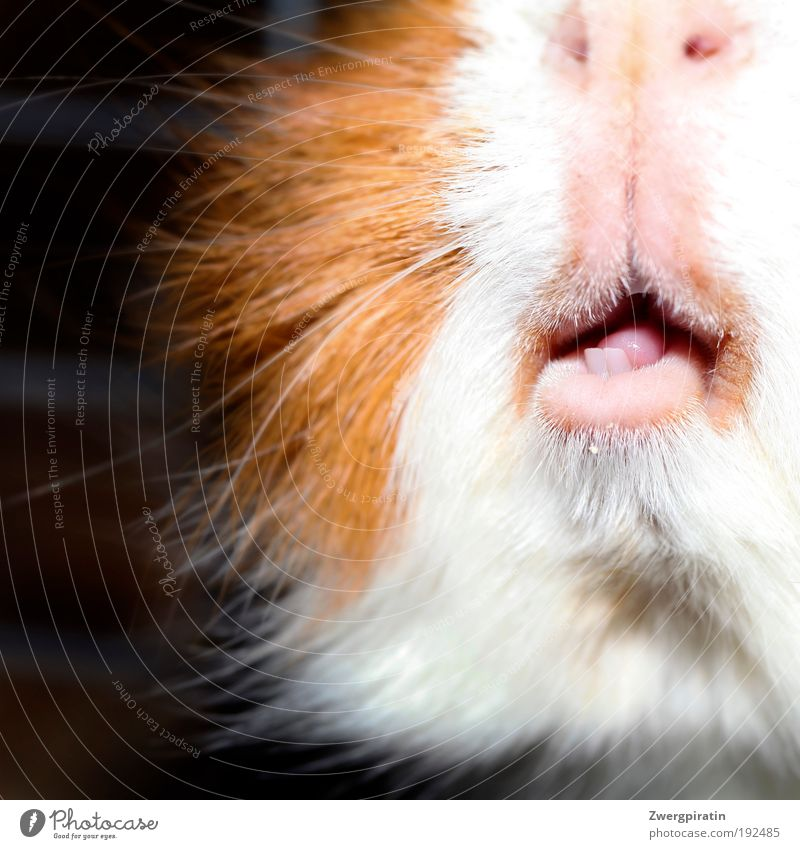 White Nutrition Animal Brown Funny Glittering Pink Nose Set of teeth Near Soft Animal face Point Pelt Exceptional Light